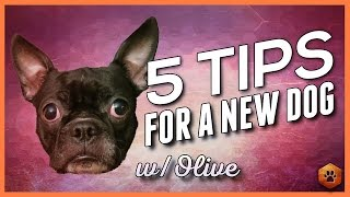 5 Big Tips When Bringing Home a New Dog