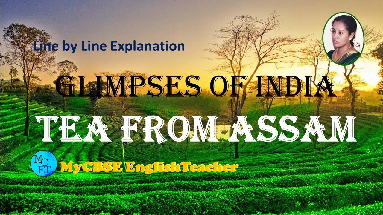 Tea from assam class 10 line by line explanation
