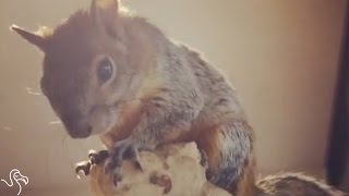Rescued Squirrel Loves Hanging Out With HIs Mom