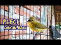 Pleci Dakun Bali Ngalas  Mp3 - Mp4 Download