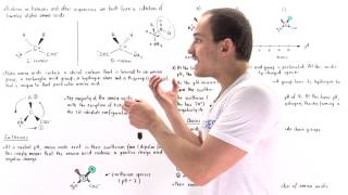 Introduction to Amino Acids
