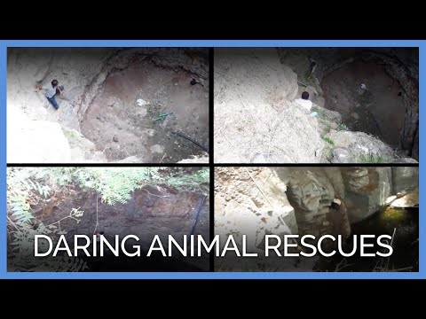 Video: These Daring Animal Rescues Will Brighten Your Day