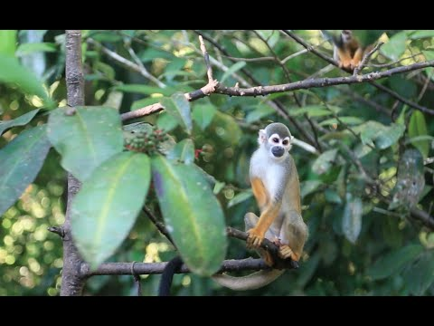 Exploring Ecosystems: Tropical Rainforest Diversity | California Academy of Sciences