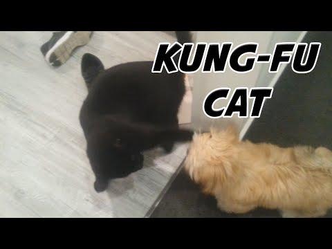 Ninja Cat Vs Dog