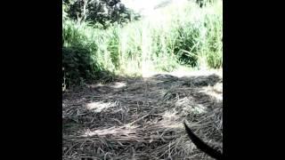 Big foot found in Trinidad