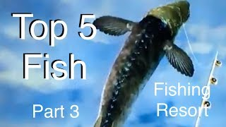 Top 5 Fish - Fishing Resort Wii - part 3