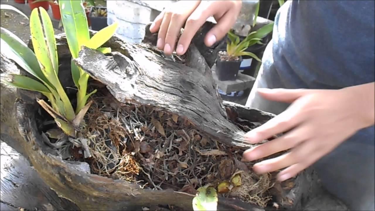 Como hacer un tronco plantado de orqu deas bromelias for Como poner un vivero
