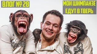 Переезжаем из Краснодара в Тверь | Мои Шимпанзе | Подготавливаем помещения для животных