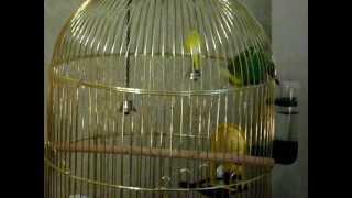Попугай-учитель:  УЧИ УРОКИ!!!!