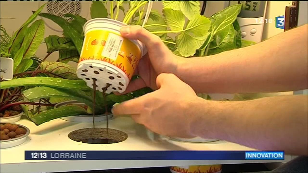 Legumes A Mettre Dans Le Jardin le pousse-légume : son jardin dans la cuisine