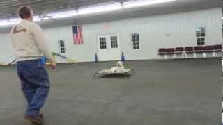 Alden's Kennels Boarding & Training Illinois