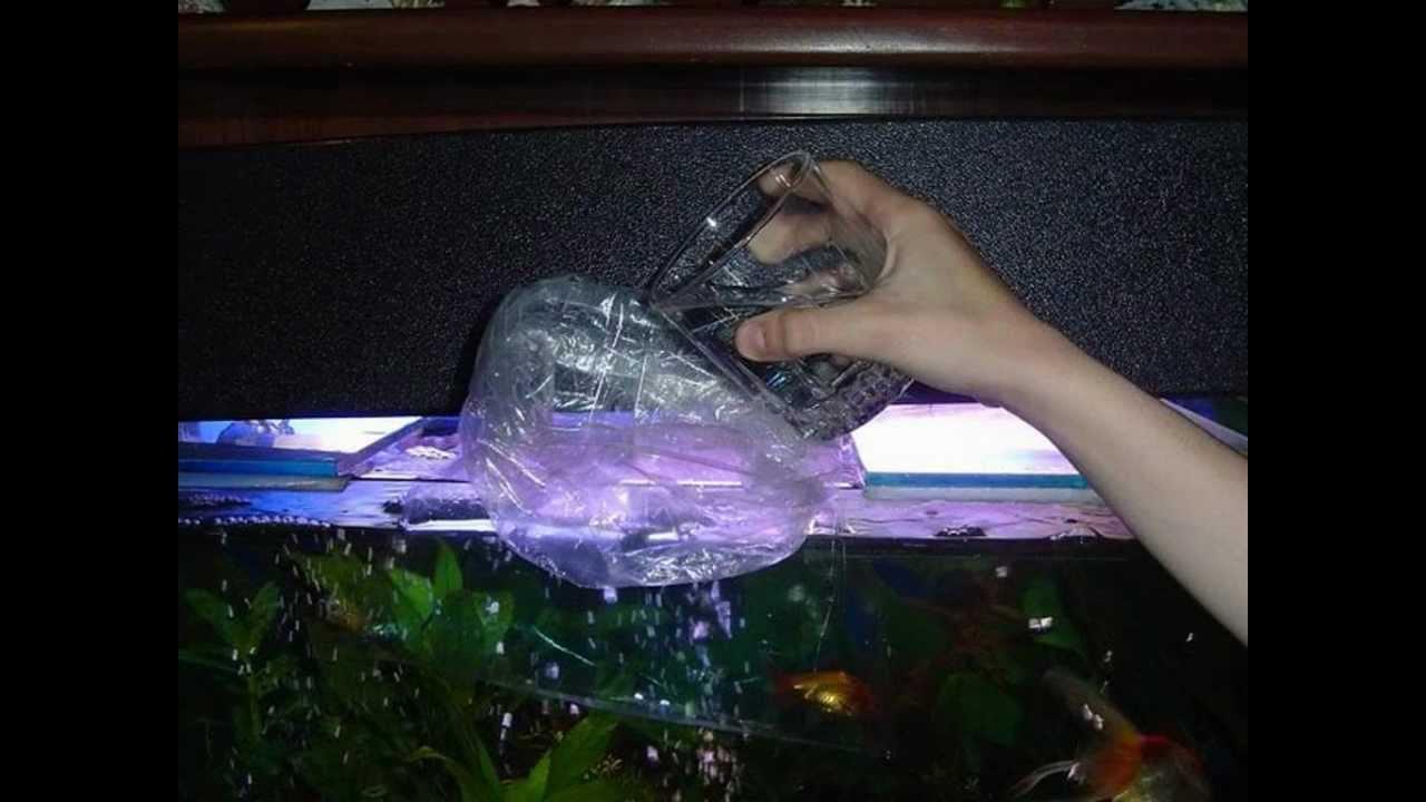 Guia para tener y mantener un acuario youtube for Como mantener el agua limpia de un estanque