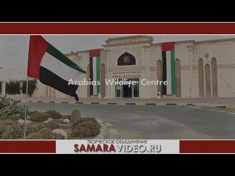 Sharjah. Arabia's Wildlife Centre.  Cameramen Andrey Abrosimov. SAMARAVIDEO