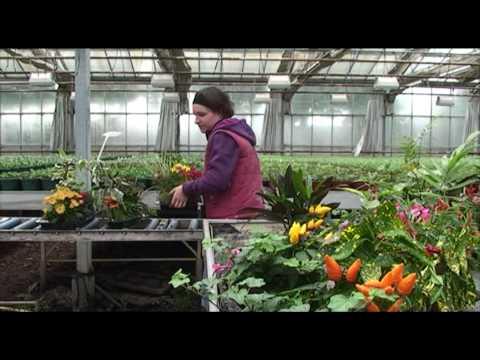 Les métiers de l'horticulture