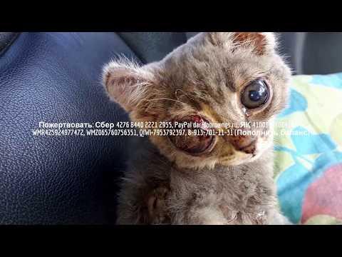 Инвалид и волонтеры спасают бездомного котенка с ожогами | Save kitten help him