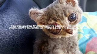 Жалко до слез Инвалид и волонтеры спасают  котенка  | Save kitten help him