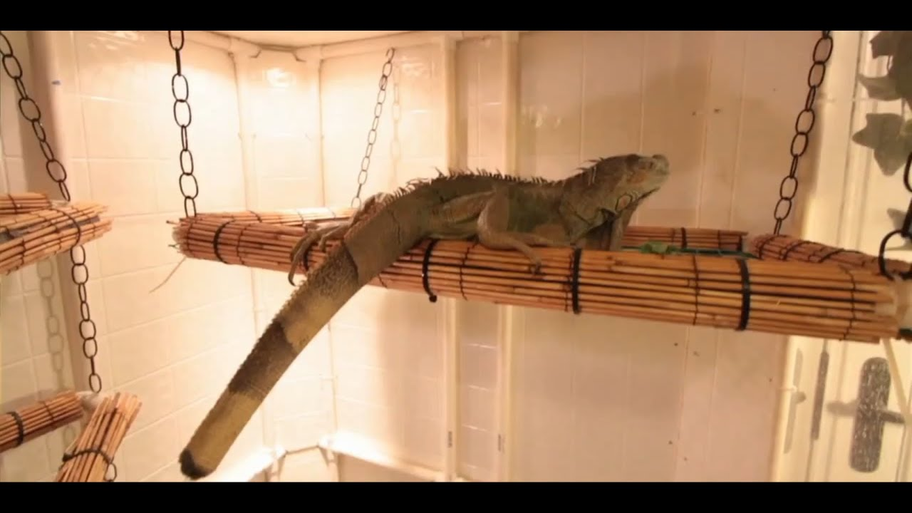 How to set up an iguana cage small pets youtube