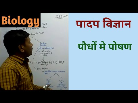 Biology: nutrition in plant