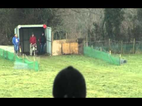 IRISH HARE COURSING   DERBY TRIAL STAKES
