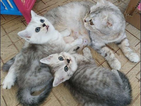 Вопрос: Сколько раз в день мяукают кошки и коты?