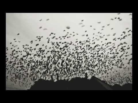Клип Yasmin Levy - Komo la Roza
