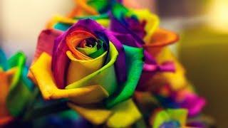 видео Бизнес-план по выращиванию цветов в теплице