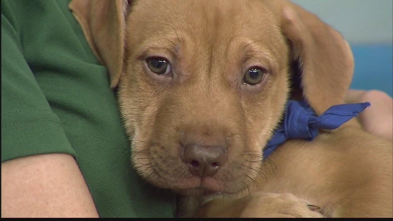 maxresdefault - National Puppy Day with the Hawaiian Humane Society