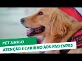 Pet Amigo: cães levam atenção e carinho aos pacientes