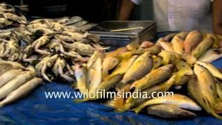 Fish Market in Madurai, Tamil Nadu