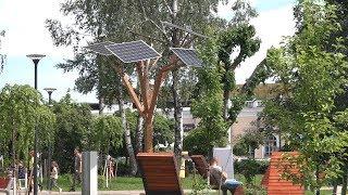 У Житомирі офіційно відкрили сквер з сонячним деревом