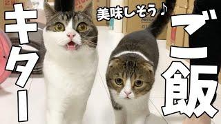 新しいキャットフードにテンションMAXな猫