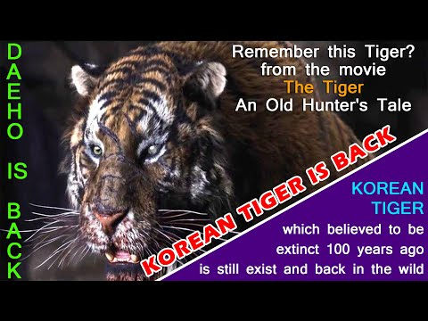 Korean Tiger which thought to be extinct since 100 years is back