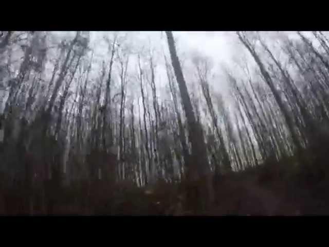 Thymo Bloemsma: Het Arumer bos