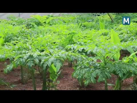 Hi-tech organic farming in Kerala
