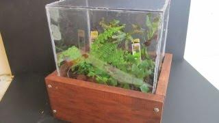 Make A Terrarium With Wooden Case