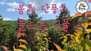 매화  홍매화 청매실 홍매실 홍가시나무 산림 임업 농업…