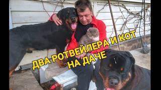 ОДИН ДЕНЬ ИЗ ЖИЗНИ РОТВЕЙЛЕРОВ И КОТА.Воспитание и дрессировка собаки.