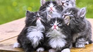 Такие разные кошки