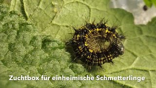 Eifalia Schmetterlingsgarten