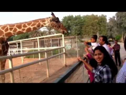 A visit to Qatar Zoo