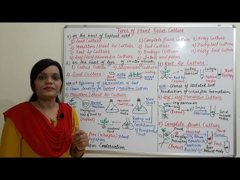 Different Types of Plant Tissue Culture (Part-01) (HINDI) By Solution Pharmacy