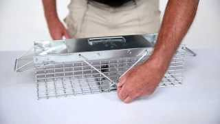 How To Set: Havahart® X-small 2-door Trap Model #1025 For Weasels, Rats & Squirrels