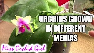 How can orchids grow well in different types of media - Casual Sundays