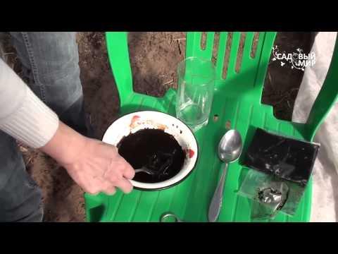 видео: Подготовка почвы в теплице после зимы  Обеззараживание почвы Фитоспорином