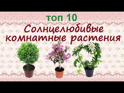 Растения для южных окон//ТОП 10