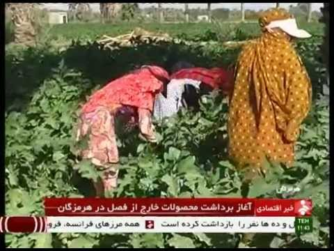 Iran Hormozgan province, Agriculture products محصولات كشاورزي استان هرمزگان ايران