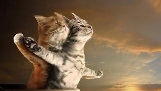 Смешные коты и кошки 2016/лучшие приколы с котами и кошками) сборник #3