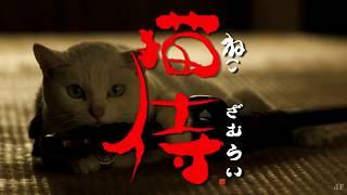 Котёнок (клип на дораму Самурай и кошка)