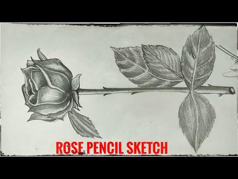 Rose Pencil sketch Time lapse video thumbnail