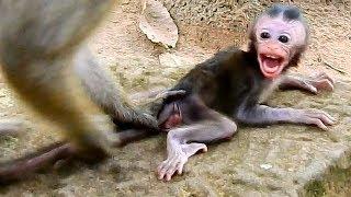 Deep scare.. Baby Daniela surprise afraid   Daniela cries seizures cos DeeDee threatening